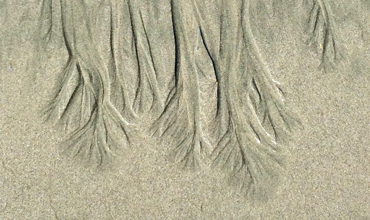 Pacific Rim shifting sand